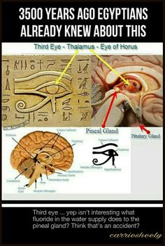 of the Third Eye, the Eye of Horus, Beyond the Illuminati Interesting . Secrets Of The Third Eye, The Eye Of Horus, Beyond The Illuminati Ancient Aliens, Ancient Egypt, Ancient History, Aliens And Ufos, Pineal Gland Facts, Decalcify Pineal Gland, 6 Chakra, Chakra Crystals, Eye Of Horus