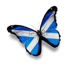 Picture of Flag of Scotland butterfly, isolated on white stock photo, images and stock photography. Independence Images, Scottish Independence, Flag Of Scotland, Scotland History, Highlands Scotland, Scotland Tattoo, Pictures Of Flags, Scottish Thistle Tattoo, Cross Flag