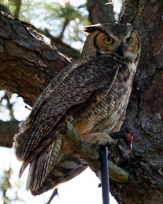 Honeymoon Island is for nature lovers. This State Park is home to owls, Osprey, and more. Can you identify this bird?