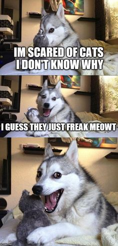 Bad Pun Dog | IM SCARED OF CATS I DON'T KNOW WHY I GUESS THEY JUST FREAK MEOWT | image tagged in memes,bad pun dog | made w/ Imgflip meme maker