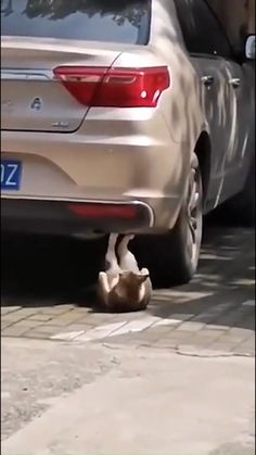 Funny Cute Cats, Cute Baby Cats, Silly Cats, Cute Little Animals, Cute Funny Animals, Crazy Cats, Cute Animal Videos, Funny Animal Pictures, Gato Gif