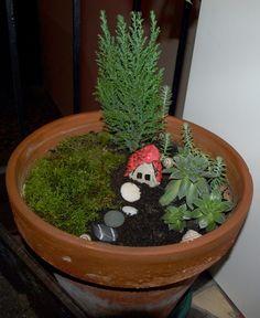 Nagyméretű cserép, kicsi tuja, moha,kövirózsa, kavicsok, csigaházak és egy kőből készített házikó tobozlevél tetővel! :-)