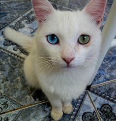 beautiful kaleidoscope eyes