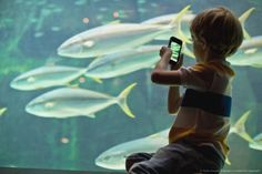 Image Detail for - Boy taking pictures of fish in aquarium Fishing Pictures, Aquarium Fish, Taking Pictures, Underwater, Dogs And Puppies, Pets, Snails, Poster, Animals