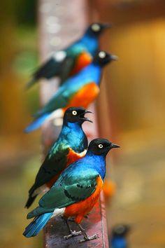 bird photography, handheld