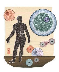 Stem Cell Illustration – Poul Lange Design