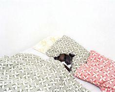 Dog in bed. Photo by Gustav Gustafsson