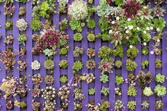 Try this look by recycling an old lattice and painting it a fresh new color that would contrast well with your succulents. Choose a color such as purple, deep rose or even blue. Then, use a moss base and pins to place your succulents.