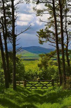England, Northumberland, Cheviot Hills