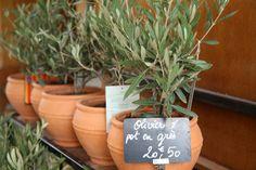 Sådan passer du oliventræer i krukker | Haveselskabet Planter Pots, Flowers, Bar Decorations, Outdoors, Table, Patio, Tables, Outdoor Rooms, Royal Icing Flowers