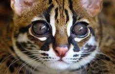Картинки по запросу кот на природе красивое