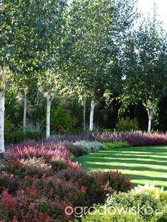 Farm Landscaping, Garden Trees, Plants, Birch Trees Landscaping, Beautiful Gardens Landscape, Garden Planning, Garden Features, Beautiful Gardens, Back Garden Design