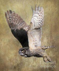 Title:  Owl In Flight   Artist:  Angie Vogel   Medium:  Photograph - Photography / Digital Art