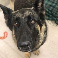Birmingham Alabama German Shepherd Dog Meet June A For