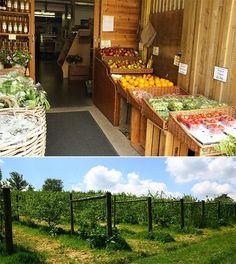 레스토랑 정원 : 네이버캐스트 (팜투테이블)