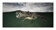 Matthew Smith, who snapped an incredible photograph of a smiling crocodile, is just one of the 12 Australians recognised at the 2015 EPSON International Pano Awards. Under The Water, Matt Smith, Underwater Photography, Animal Photography, Cuba Photography, Nature Photography, Photography Ideas, Crocodile Marin, American Crocodile