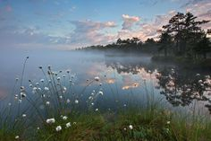 Calm Morning in the Bog Photo by Janek Laanemäe — National Geographic Your Shot