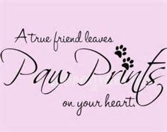quotes for pets - Bing Images