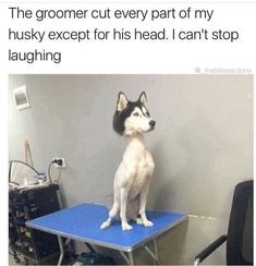 This poor dog. Lol This poor dog. Memes Humor, Funny Dog Memes, Crazy Funny Memes, Really Funny Memes, Funny Dogs, Dog Humor, Funny Stuff, Pet Memes, Cat And Dog Memes