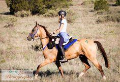 Kuguar (Gam-Katrin) Aksakal line. Competing in endurance. Bred by T.Pontecorvo.