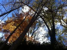 autumn in austria Austria, Contemporary Art, Autumn, Celestial, Sunset, Plants, Outdoor, Outdoors, Fall Season