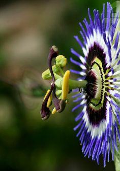 BANCO DE IMAGENES GRATIS: 60 fotografías de las flores más hermosas del mundo
