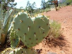 the cactus hearts you