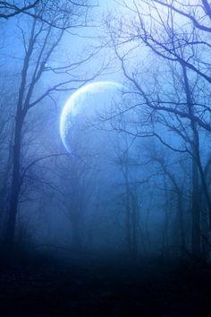 blue forest by *beyzayildirim77