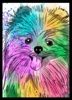 Lulu da Pomerânia (Spitz Alemão Anão) - Dog in Art
