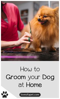 How to Groom Your Dog at Home: Combining hygiene, home grooming, plus regular professional grooming visits will leave your dog's eyes, ears, nails, teeth, coat, and paws clean and healthy. #DogGroomingTips #GroomYourDogAtHome Puppy Training Schedule, Dog Training Treats, Dog Training Tips, Dog Cleaning, Teeth Cleaning, Dog Grooming Tips, Dog Eyes, Dog Teeth, Dog Owners