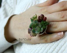 anello di piante succulente
