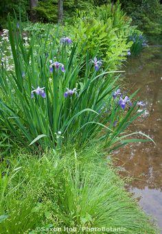 clethra alnifolia 39 pink spire 39 garden pinterest shrub and gardens. Black Bedroom Furniture Sets. Home Design Ideas