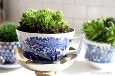 Love these for a tablescape!   Teacup Gardens {5 Minute Miniature Container Garden}