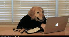 Your Entire Work Day, Explained By Dogs