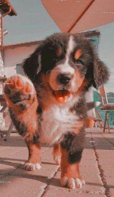 Cute Wild Animals, Baby Animals Pictures, Super Cute Animals, Cute Little Animals, Cute Animal Pictures, Cute Funny Animals, Wild Animals Photos, Puppy Pictures, Super Cute Puppies
