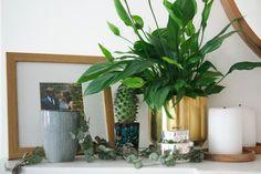 Oh SO Many House Plants…
