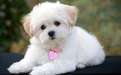 Pets também podem ter câncer de mama