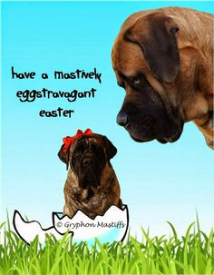 Boone & Brinkley Say Happy Easter to Everyone! Cat Vs Dog, English Mastiff, Happy Easter, Cute Animals, Doggy Stuff, Sayings, My Love, Cats, Madness