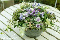 Container Flowers, Container Plants, Container Gardening, Pretty Flowers, Fresh Flowers, Green Garden, Garden Paths, Pansies, Floral Arrangements
