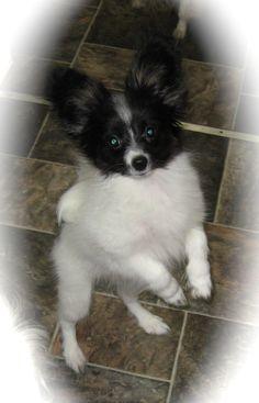 Past MerryMaker puppy.