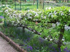 Espalier fruit trees enclosing veg garden or other area in yard?...interesting concept