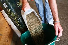 Five things you should know about how to feed your horse.