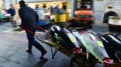 Thon rouge: dix nations d'Asie-Pacifique se sont séparées vendredi sans parvenir…