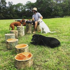 The tree stump obstacle course can also be used as tables and chairs for afternoon tea!