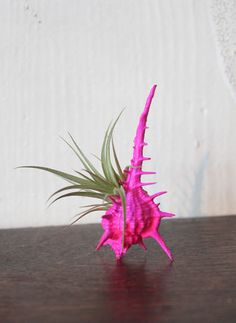hot pink LOVE garden // airplant tillandsia by peacocktaco on Etsy, $18.00