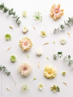 Deconstructed Flowers by Sophia Hsin
