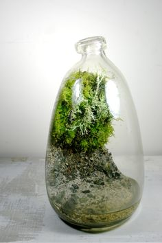 we create objects of wilderness.  one of a kind artisan terrariums of local plants and moss inside repurposed found and heirloom glass vessels.  every living sculpture is imagined and created by Jose 'Jojo' Agatep.