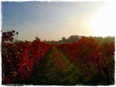 Weingärten, leuchtender Herbst Celestial, Sunset, Outdoor, Sunday, Pretty Pictures, Light Fixtures, Autumn, Nice Asses, Outdoors