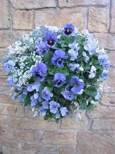 Outdoor Plants, Garden Plants, Garden Basket, Annual Flowers, Growing Flowers, Green Life, Hanging Baskets, Green Flowers, Dream Garden
