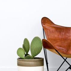 Cactus en leren stoel.